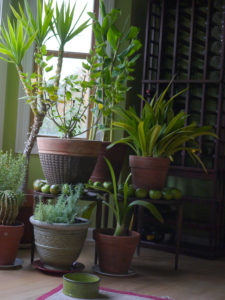 houseplants and air quality