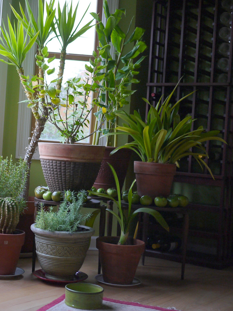 Active Healthcare How Houseplants Affect Asthma and Air ... on non toxic house plants, allergy house plants, long lasting house plants, durable house plants,